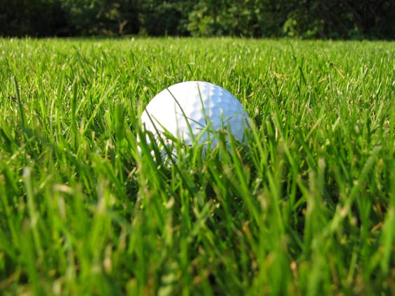 Golf-ball-in-a-grass