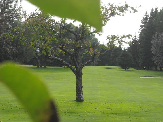 Golf-course-obstacles