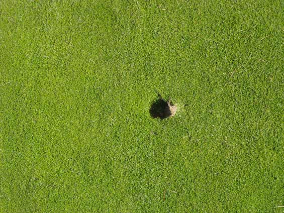 golf course pitch-marks